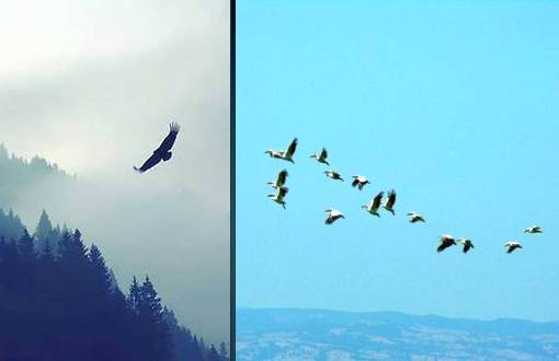istanbul_bird_migration_festival